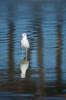 Free Gull On The Beach Royalty Free Stock Images - 5180449