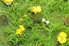 Free Grass Detail Stock Images - 5182804
