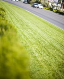 Free Grass And Cars Stock Photo - 5185400
