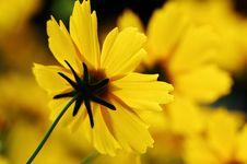 Free Golden Flower Stock Photography - 5185452