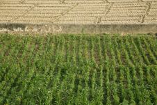 Green And Brown Field Patterns In Rajasthan Royalty Free Stock Photography