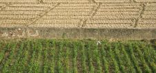 Green And Brown Field Patterns In Rajasthan Royalty Free Stock Images