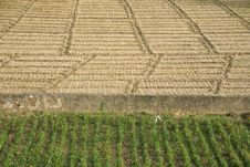 Free Green And Brown Field Patterns In Rajasthan Stock Photo - 5185740