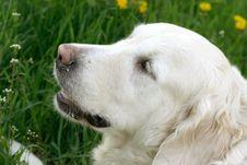 Free Dog On Walk Royalty Free Stock Image - 5186606