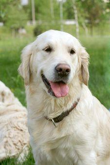 Free Dog On Walk Stock Images - 5186764
