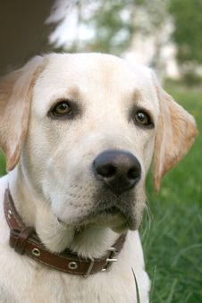 Dog On Walk Royalty Free Stock Images
