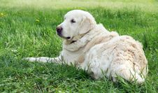 Dogs On Walk Stock Photography