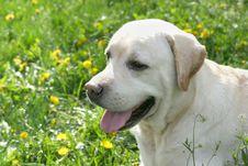 Dog On Walk Stock Images