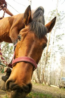 Free Feeding Horse Closeup Stock Photos - 5186883