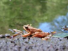 Free Frog Stock Photography - 5188582