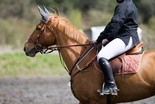 Free Horse On A Jumping Event Stock Image - 5188791