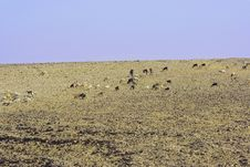 Free Judean Desert Stock Photography - 5189322