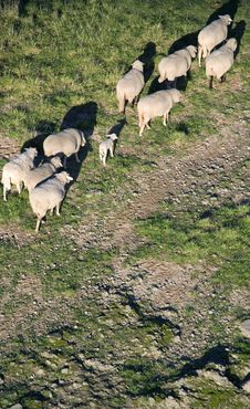 Free Sheepmeadows Royalty Free Stock Image - 5189426