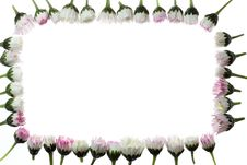 Free Floral Frame Stock Photo - 5189710