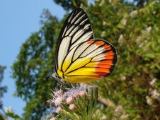 Free Butterfly Stock Photography - 5189972