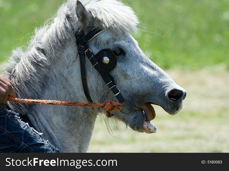 Horse Head-Pony