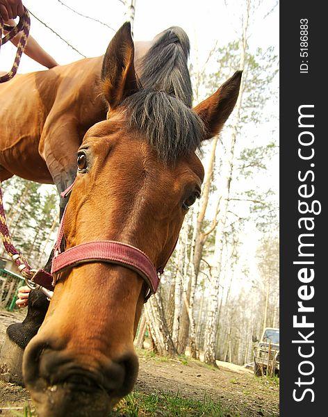 Feeding horse closeup