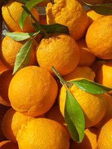 Free Sicilian Red Oranges Royalty Free Stock Images - 51834019