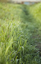 Free Drop In Grass Royalty Free Stock Photography - 5190157