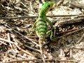 Free Green Lizard Stock Photos - 5190543