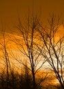 Free Leafless Trees At Sunset Stock Image - 5191861
