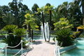 Free Palm-Trees On A Small Lake Stock Images - 5195404