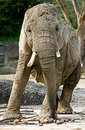 Free Elephant 9 Stock Photo - 5197160