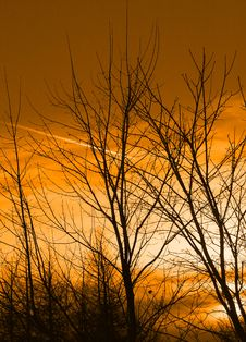 Free Leafless Trees At Sunset Stock Image - 5191861