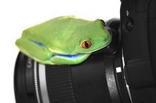 Free Tree Frog On Camera Stock Photos - 5192903