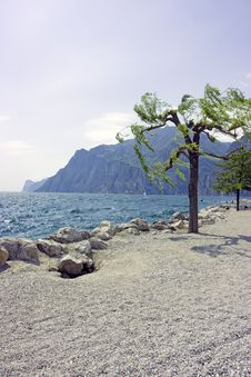 Free Tree On Rocky Beach Royalty Free Stock Photo - 5192915