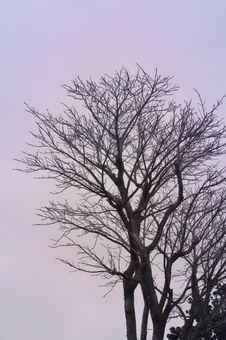 Free Hazy Tree Stock Photos - 5194353