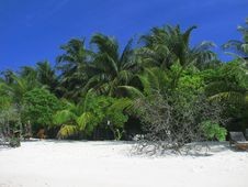 Free Maldivian Beach Royalty Free Stock Photo - 5194475