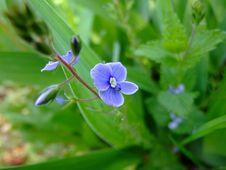 Free Wild Blue Flower Stock Image - 5194551