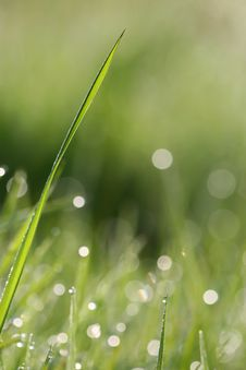 Free Grass Stalk Stock Image - 5195101