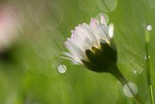 Free Daisy Stock Photography - 5195182