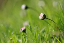 Free Morning Meadow Stock Photography - 5195192