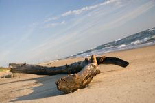 Free Log On The Coast Royalty Free Stock Photos - 5195498