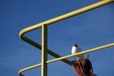 Free Seagull On The Ship Stock Image - 5195581