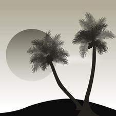 Free Palm Trees Royalty Free Stock Photos - 5195618