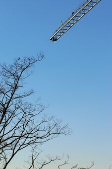 Free Crane And Tree In The Sky Royalty Free Stock Photos - 5196068