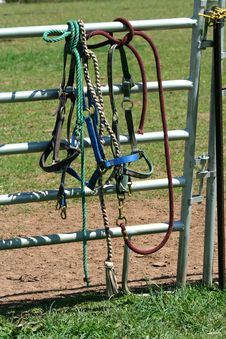 Free Horse Bidels And Ropes On A Fence Royalty Free Stock Images - 5196209