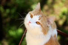 Free Cat Close-up Royalty Free Stock Photo - 5196505