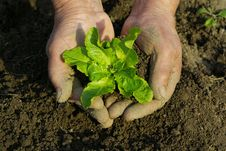Free Plant In Hands Stock Photo - 5196900