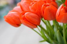 Free Beautiful Red Tulips Royalty Free Stock Photo - 5198095