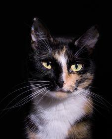 Free Cat Stock Photo - 5198160