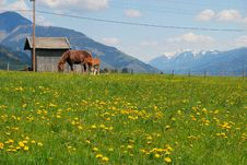 Landscape With Horse And Foal Royalty Free Stock Photography
