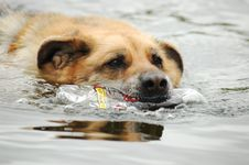 Free Dog Swimming With Plastic Bottle Royalty Free Stock Images - 5198959