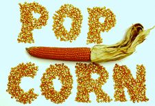 Free Corns Of Maize Royalty Free Stock Photography - 5199477