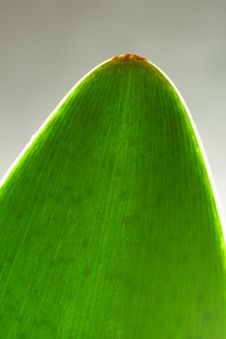 Free Green Leaf Stock Images - 5199734