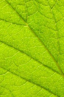 Free Green Leaf Stock Photo - 5199820